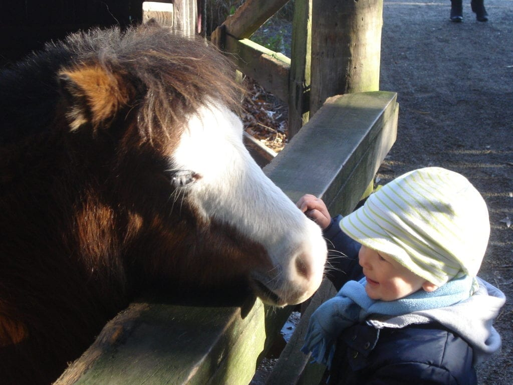 Special moment captured between the pony and my 2 year old son